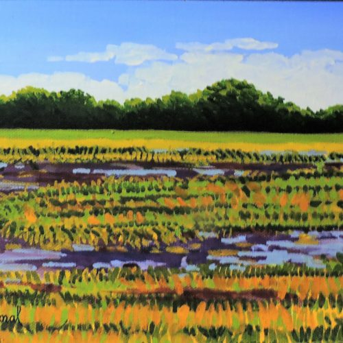 Grassy Field and Stream